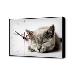 Настенные часы Серая кошка Timebox Toplight 37х60х4см TL-C5022